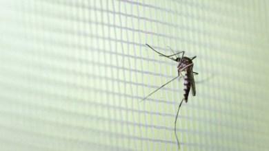 Foto de Visconde do Rio Branco e Guiricema registram casos prováveis de dengue nas últimas quatro semanas
