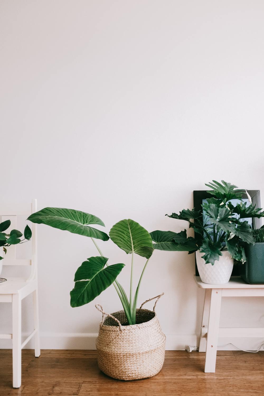 Hygge e as Plantas