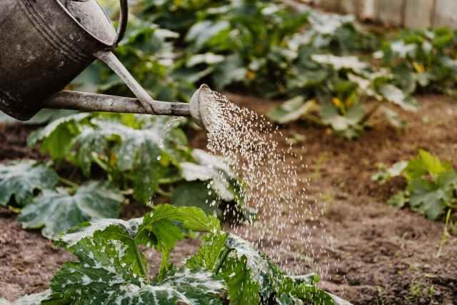 person watering outdoor plants