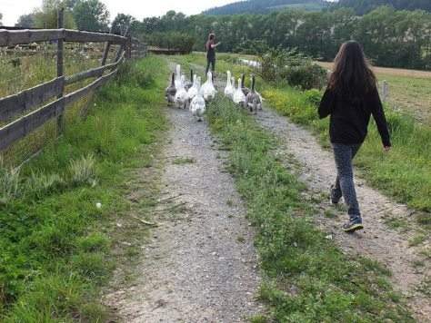 goose drive