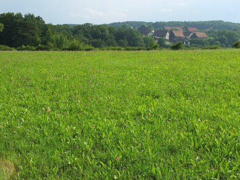 field with village