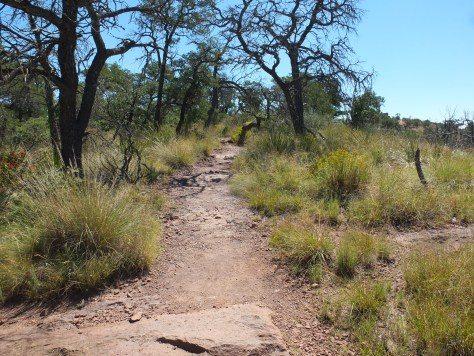 Big Bend Texas Hikes