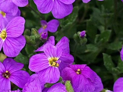 Sheffield - Flowers