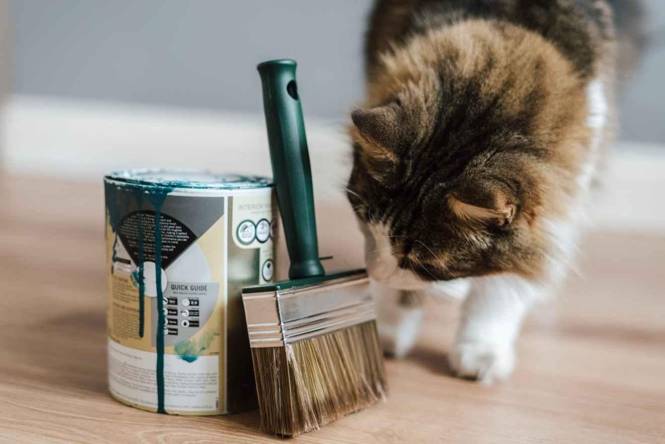 curious cat smelling paintbrush near paint pot