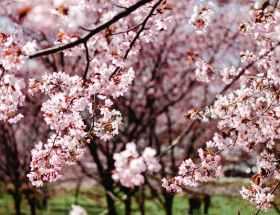 nature sunny flowers garden