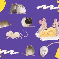 Sobre ratas y programas de educación de arte