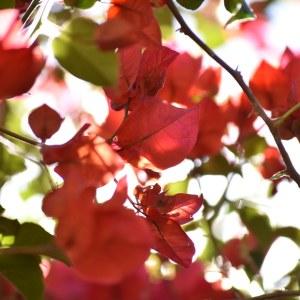flores morelia ACG jacarandas 2