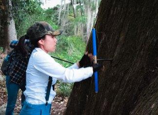 Estudian variaciones climáticas a través de la edad de los árboles