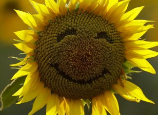 Por qué el Día Internacional de la Felicidad se celebra el 20 de marzo