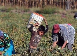En México 3.2 millones de niños trabajan: Inegi