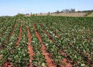 Venden agricultores sus tierras a particulares
