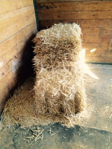 We repurpose everything we can on the farm here we use fresh straw to make bedding and nesting boxes and after we change out for fresh straw we repurpose used straw for onion beds to insulate and fertilize