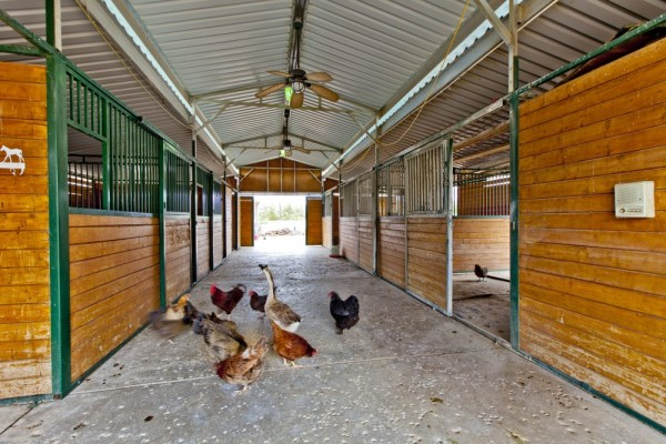 Heritage Breed Chickens