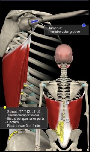 懸垂で使う筋肉
