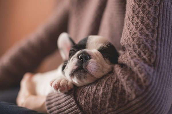 4 Tips To Taking Care Of A New Puppy