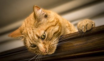 4 Tips for Making Healthy Cat Food
