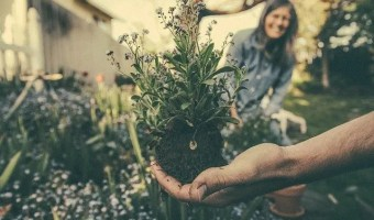 A Guide On Buying Gardening Supplies