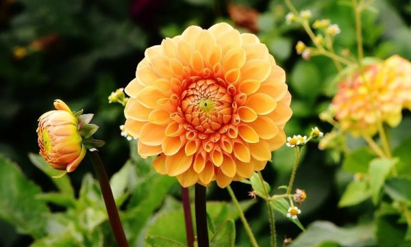 creating the perfect garden