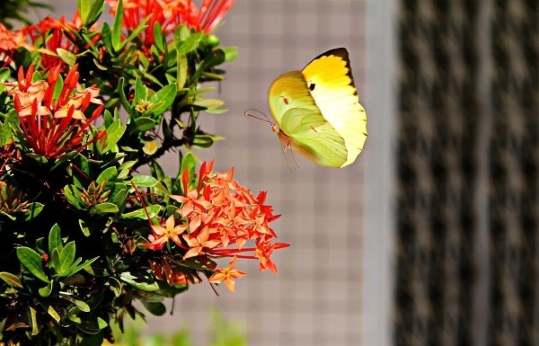 butterfly visiting plant in garden