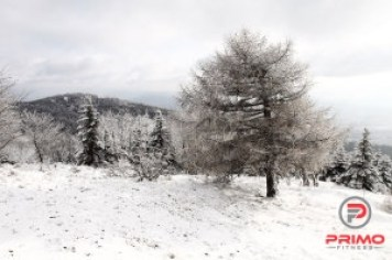 9214-a-tree-in-a-winter-landscape-pv