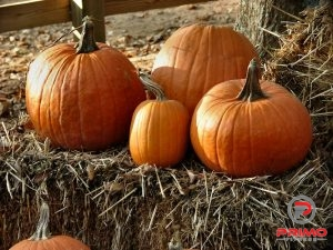1113-pumpkins-and-straw-pv