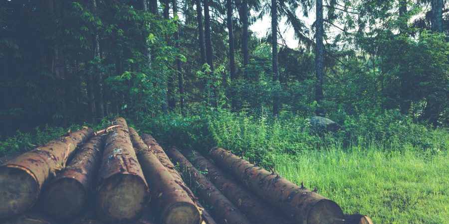 Unsustainable practice of logging confirmed