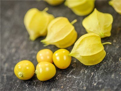 Ground Cherries: Are they the new strawberry? #PrimroseCreations #lovethelifeyoulive #groundcherries #auntmollysgroundcherry #bakercreek