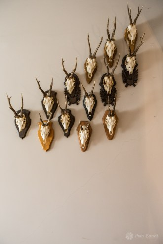 Banaterra Castle - Hunting trophies