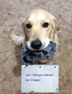 Dogs That Love Underwear
