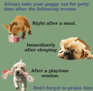 Potty-training-a-puppy - Copy
