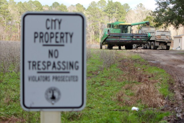 At left, the city land along Salem Road where two farming operations were discovered in late December is now posted. Soy from another field is being placed in the truck. [John-Henry Doucette/The Princess Anne Independent News]
