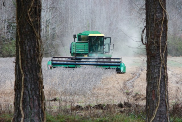 "A man harvests soybeans grown on city property off Salem Road on Tuesday, Jan. 5. Soybeans grown on two city properties without permission were discovered after authorities found hogs kept in poor conditions on public land. One of the men harvesting the soybeans said he had nothing to do with hogs found in what officials called ""deplorable"" conditions nearby. The man declined to confirm his name to a reporter. [John-Henry Doucette/The Princess Anne Independent News]"