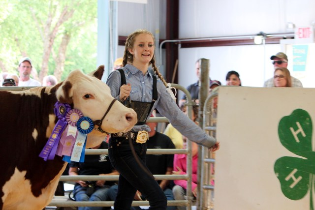 Virginia Beach 4-H Livestock Club members like Reagan Vaughan of Pungo show the result of hard work. [John-Henry Doucette/The Princess Anne Independent News]