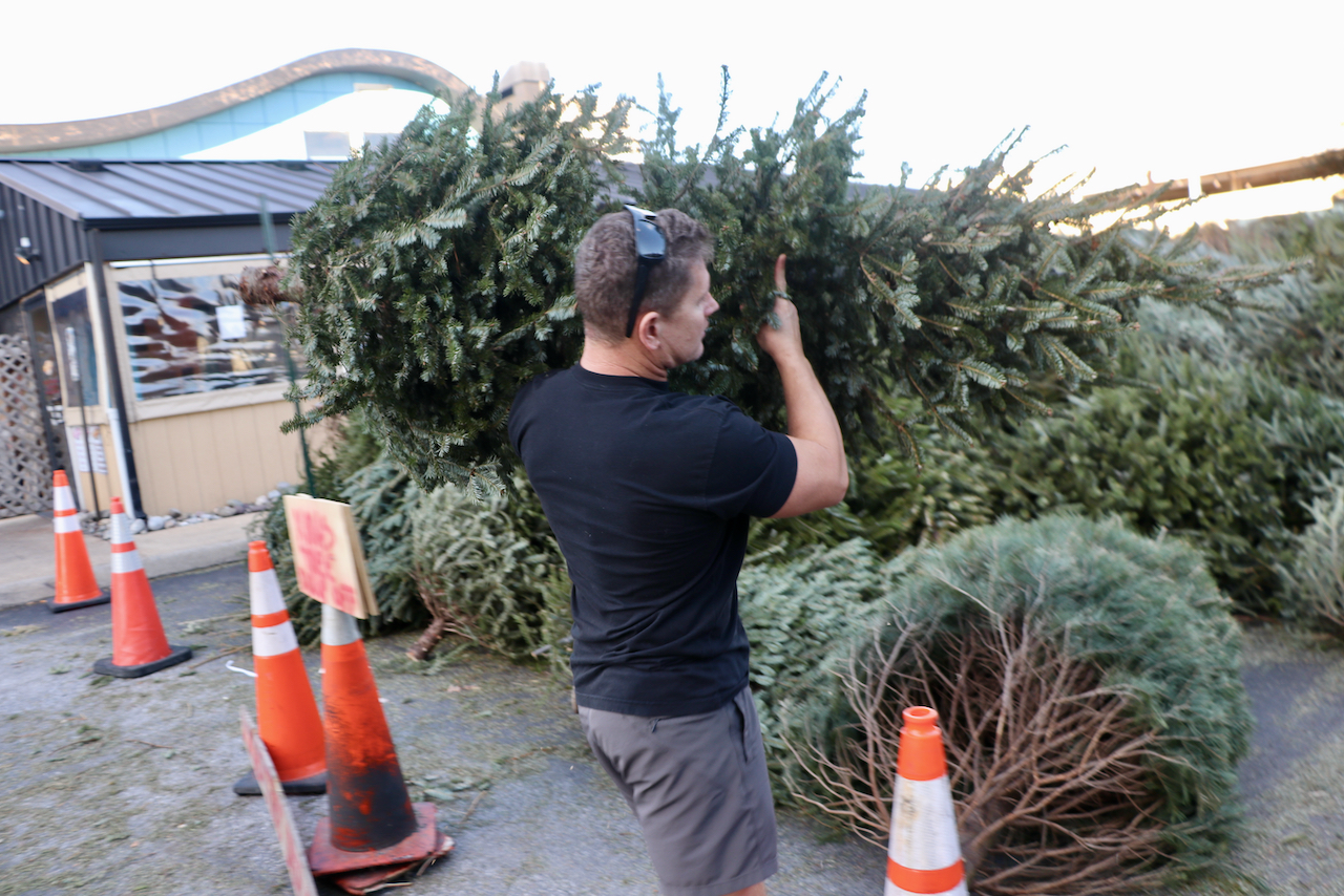 In Virginia Beach, Chicho's seeks volunteers to deliver Christmas trees to Outer Banks beaches