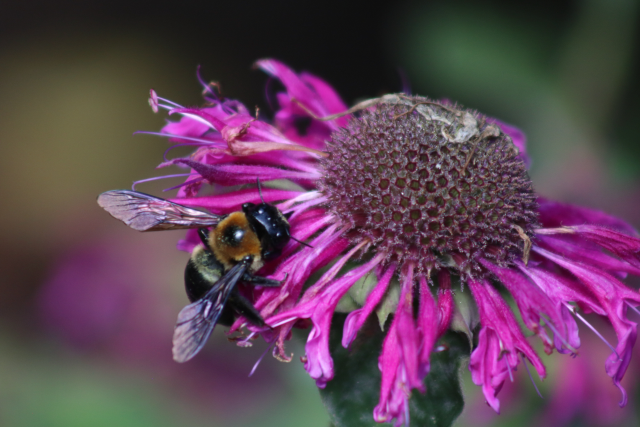 Pollinator garden celebrated at Red Wing Park, the start of outreach efforts in Virginia Beach