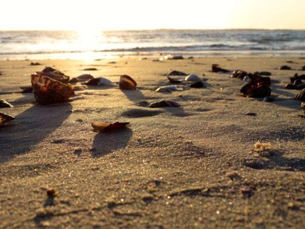 A West Coast Beach | west coast road trip
