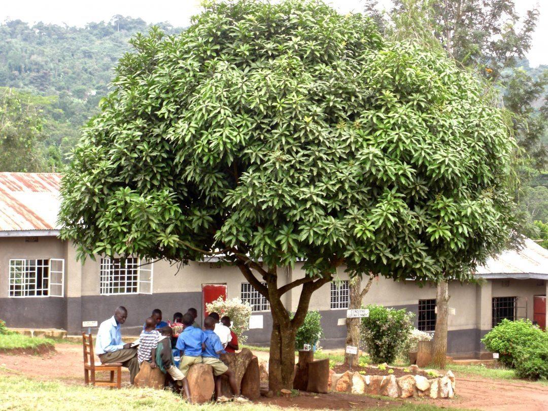 Liebster Award | My 'Reading Tree' at school in Uganda