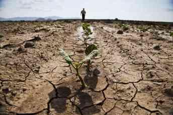 orig-src_-susanne-posel_-daily_-news-geoengineering-drought-famine_occupycorporatism
