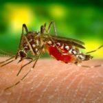 Kuba sprečava Zika virus dok SAD proglašava vanredno stanje u Portoriku