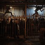Na posao i nazad kroz kaveze (VIDEO)