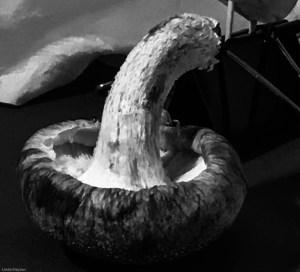 Mushrooms reference photo