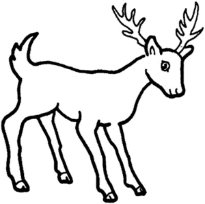 deer cartoon coloring drawing easy animals pages wild whitetail drawings printable sketches reindeer outline sketch buck mule draw clipart pencil