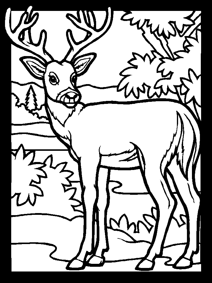 Deer 2577 Animals Printable Coloring Pages