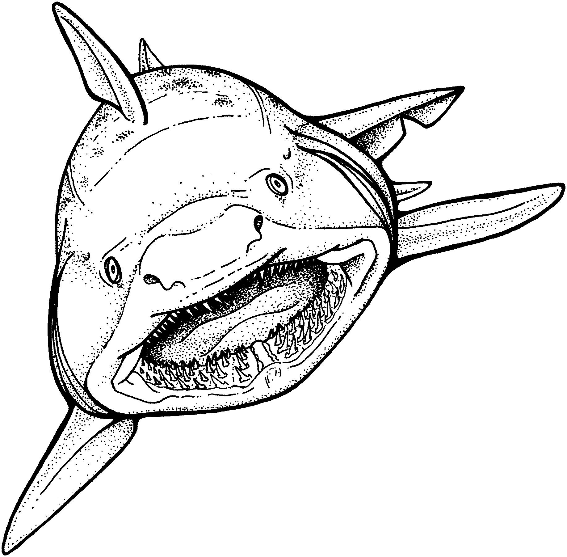 Shark Animals Printable Coloring Pages