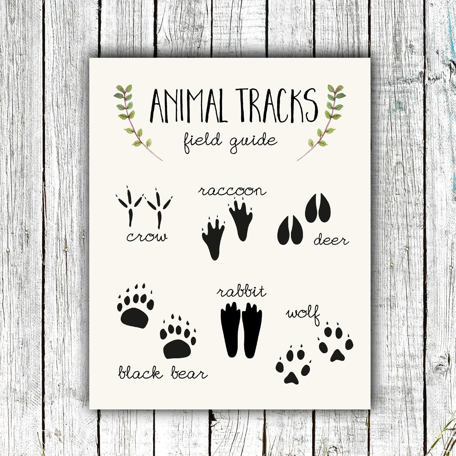 Printable Animal Tracks Ruler