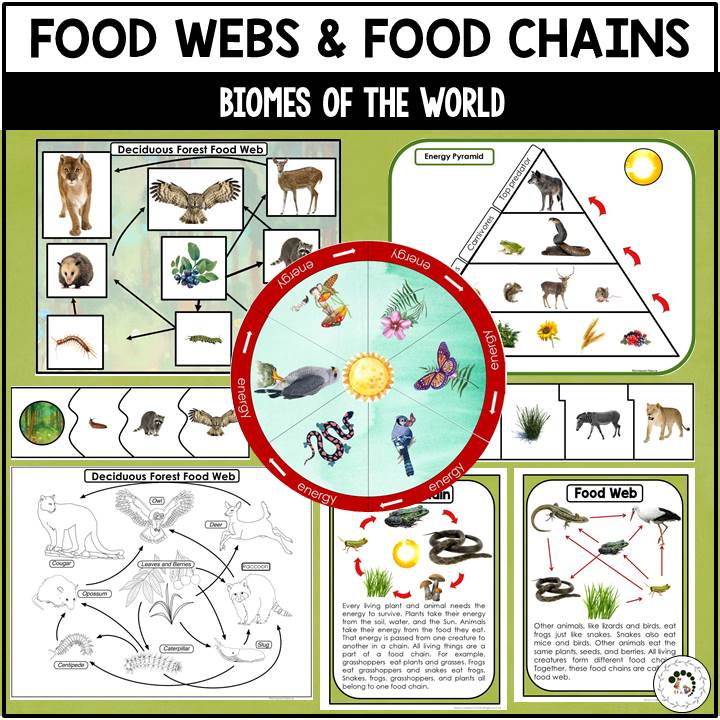 If the food chain did not have voles, their predators. Food Chains And Food Webs Of Biomes Nature Curriculum In Cards