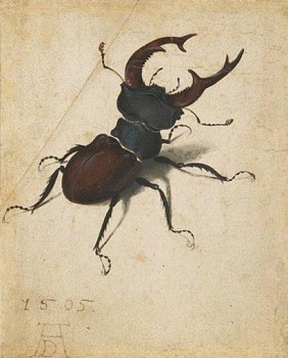 stag-beetle-albrecht-durer