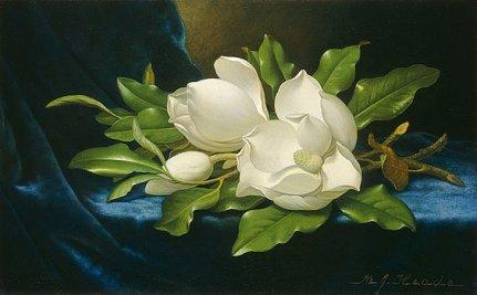 2-giant-magnolias-on-a-blue-velvet-cloth-martin-johnson-heade