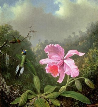 orchid-and-hummingbirds-martin-johnson-heade