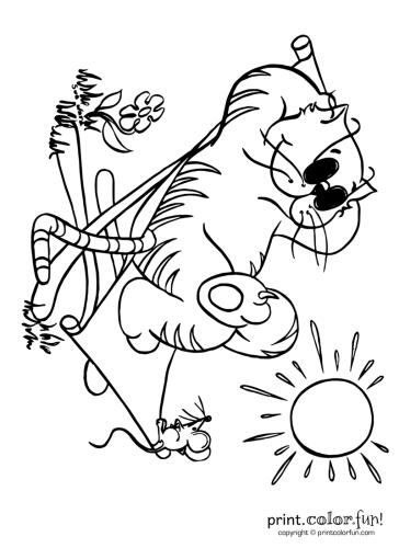 Cool-cat-in-the-sun